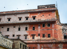 Birds at the old houses in Jaipur, India Stock Photo