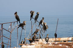 Birds on an old pier. On the bank of Black sea Stock Photos