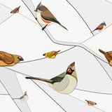 Birds On A Branch. Seamless Pattern. Royalty Free Stock Photos
