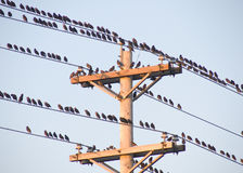 Free Birds On A Wire Stock Photography - 3435202