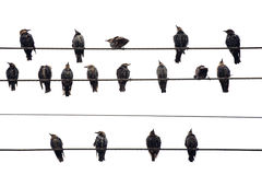 Birds On A Wire. Isolated On Royalty Free Stock Photos