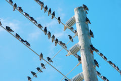 Birds On Electrical Wire Royalty Free Stock Photo