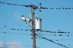 Free Birds On Wires Stock Photo - 22587080