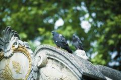 Birds on Ottoman Masterpiece Royalty Free Stock Photos