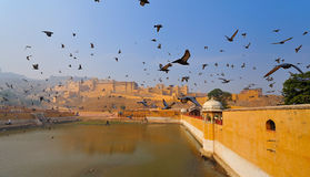 Birds over amber fort Stock Photography