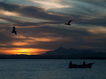 Birds over boat at sunset. Birds flying over boats on water in Patagonia at sunset stock photo