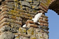 Birds over The Church of Saint Sofia Royalty Free Stock Image