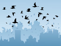 Birds over a city Stock Photography