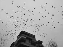 Birds over dark sky Royalty Free Stock Photos