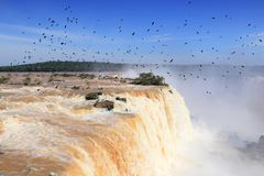 Birds over Iguazu Stock Photos