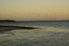 Birds over the lagoon Royalty Free Stock Photography