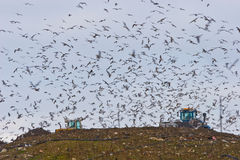 Birds over a Landfill Royalty Free Stock Photos