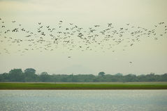 Birds Over Parakrama Samudra Royalty Free Stock Image