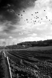 Birds over ploughed field Royalty Free Stock Photos