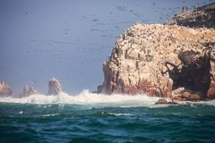 Birds over the reef national park Isla de Ballestas, Peru Royalty Free Stock Photo
