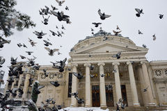 Birds over the Romanian Atheneum Royalty Free Stock Images