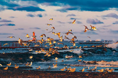 Birds over the sea Royalty Free Stock Images