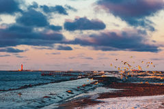 Birds over the sea Royalty Free Stock Photography
