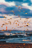 Birds over the sea Stock Images