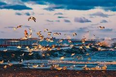 Birds over the sea Stock Image