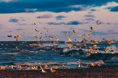 Birds over the sea Stock Photos