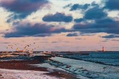Birds over the sea Stock Photo