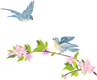 Birds over a spring tree Royalty Free Stock Images