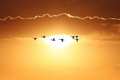 Birds over sunny golden background royalty free stock image