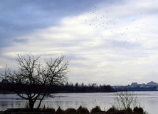 Birds over the water Royalty Free Stock Photo
