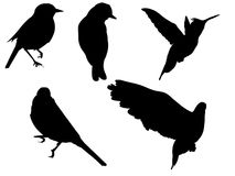 Birds over white Stock Images