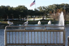 Birds overlooking lake Royalty Free Stock Images