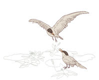 Birds pair Stock Photo