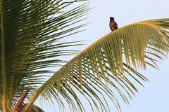Birds on Palm Trees Royalty Free Stock Photo