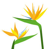 Birds of Paradise Flower-vector Stock Images
