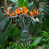 Birds of paradise flowers bouquet Royalty Free Stock Photos