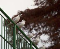 Birds Park lake attack Royalty Free Stock Photo