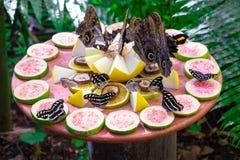 Birds of Parque Das Aves. Photo of a couple of butterflies, in Parque Das Aves, Brazil stock photo