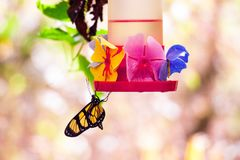 Birds of Parque Das Aves. Photo of a couple of a butterfly in Parque Das Aves, Brazil stock photo