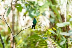 Birds of Parque Das Aves. Photo of a couple of hummingbird, in Parque Das Aves, Brazil royalty free stock photography