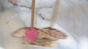 Birds pecking seeds from the basket, where he pasted red heart. Selective focus, close-up. stock video footage