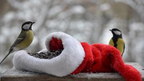 Birds pecking seeds in the winter, Christmas. The snowy background.
