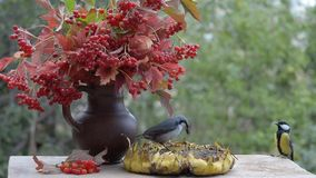 Birds pecking sunflower seeds from sunflower, which is on the table in the garden. stock footage