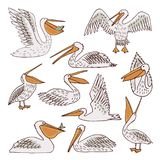 Birds pelicans and fish background. Pelican pattern, texture design, illustration pelican seamless Royalty Free Stock Photography