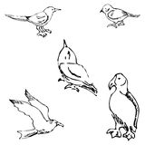 Birds. Pencil sketch by hand Stock Photo