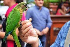 Birds and people in harmony stock photo