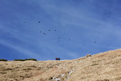 Birds and people in the mountains Royalty Free Stock Images