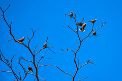 Birds perch on the dry tree Stock Image
