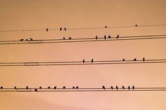 Birds. Perch on power lines Royalty Free Stock Photography