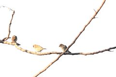 Birds perch on tree branches