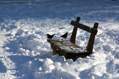 Birds perched on a bench in a snow park Stock Photography